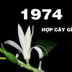Sinh năm 1974 hợp cây gì