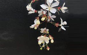 Hoa dạ ngọc minh châu