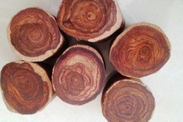 Vì sao gỗ Sưa lại đắt – có mấy loại gỗ Sưa?