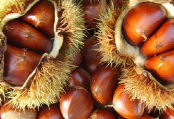Cây hạt dẻ – Cây dẻ thơm