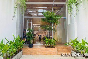 Có nên trồng cây bàng Đài Loan trước nhà? Phong thủy cây bàng Đài Loan